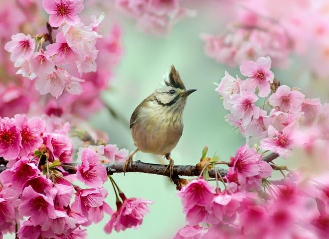 Школа танцев Минск, Уручье, восток, малиновка, Каменная Горка поздравляет всех с наступлением весны